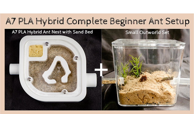 A7 PLA Hybrid Nest with Sand Bed and Small Arena Set Complete Beginner ANT Setup