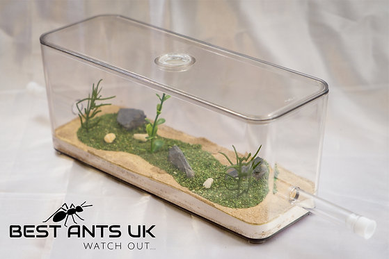 Medium Ant Sand and Meadow Outworld Arena Formicarium Farm Ant Housing