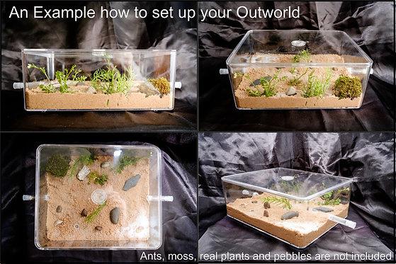 Ant Arena Outworld Formicarium Farm Large Set Best Ants UK Nest