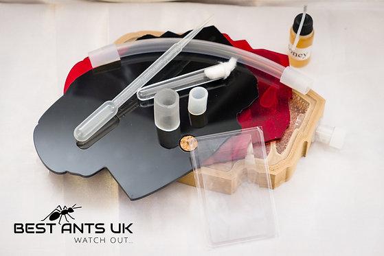 Large Carpenter  Hybrid Nest PLA with wood bed Ant Farm Formicarium Best Ants UK