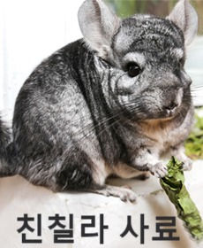 Chinchilla%20(2)_edited.jpg