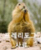 Prairie-dog-002_edited.jpg