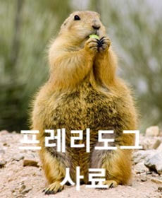 Prairie-dog-002_edited.jpg
