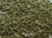 Turtle feed.jpg