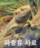 Reptile%20(1)_edited.jpg