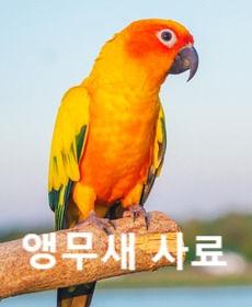 Parrot%20(1)_edited.jpg