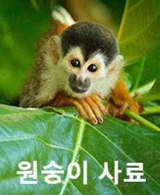 Monkey%20(1)_edited.jpg