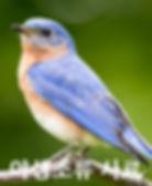 Wid%20bird_edited.jpg
