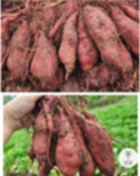 사진 4-2.jpg