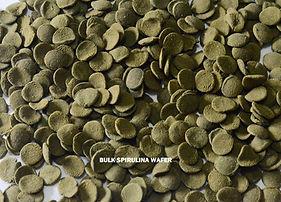 bulk Spirulina wafer.jpg