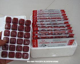MC-068 Frozen Bloodworms.jpg