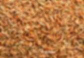 FD red shrimp.jpg