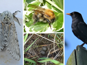 May 2021 Results: Find Wildlife From Home Survey