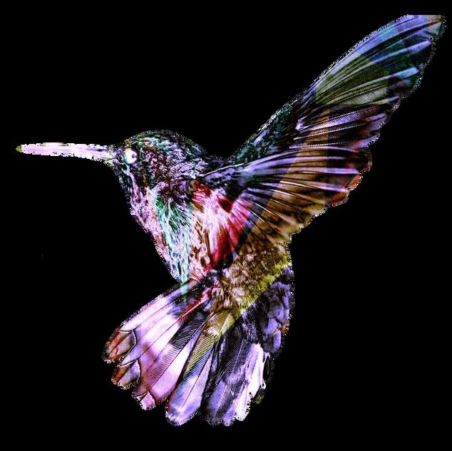 Bird_Diamond-solo.png