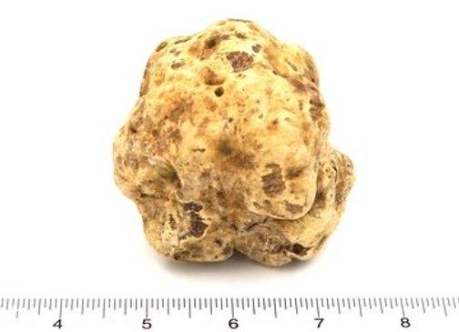 Fresh White Truffle Large Size