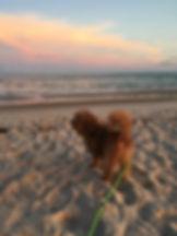 Charlie Beach.jpg