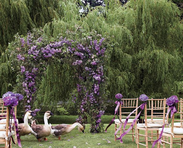wisteria ceremony