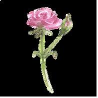 pink rose1.png