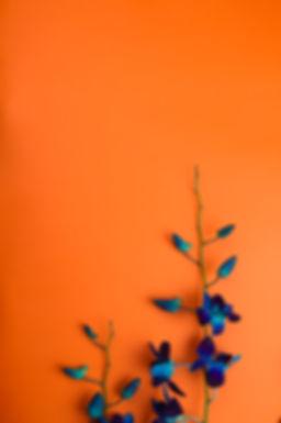 naranjafondo.jpg