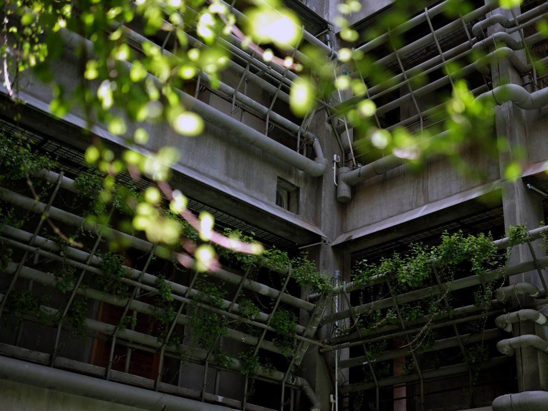 Greenhost Jogjakarta Ceiling.jpeg