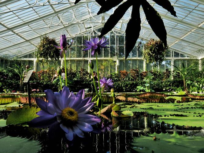 Waterlily House KEW Garden.jpeg