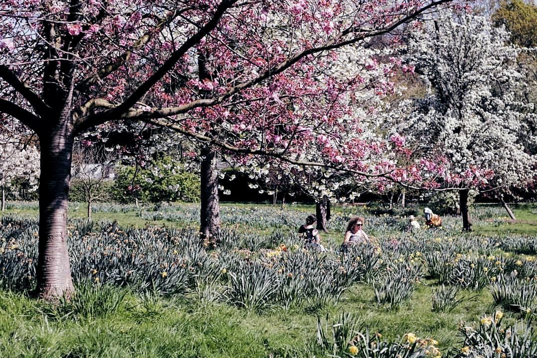 Spring at Golders green park