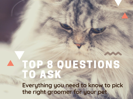 Top 8 Questions To Ask: Everything You Need To Know To Pick The Right Groomer For Your Pet