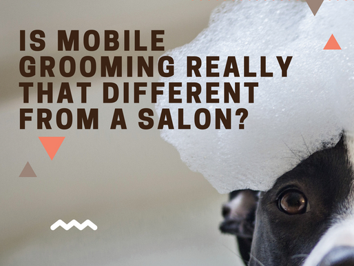 Is Mobile Grooming Really that Different from a Salon?