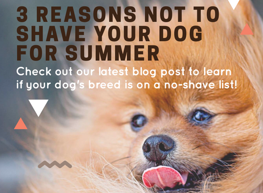 3 Reasons Not to Shave Your Dog for Summer
