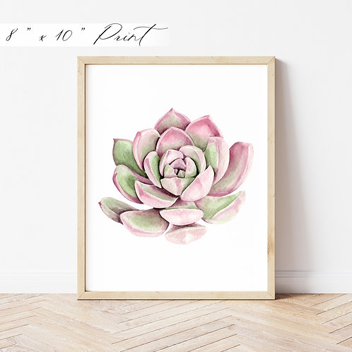 Pink Succulent Watercolor