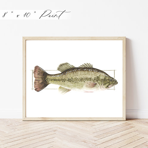 Small Mouth Bass Watercolor