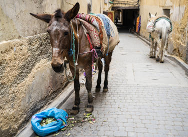 Moroccan Mule 2