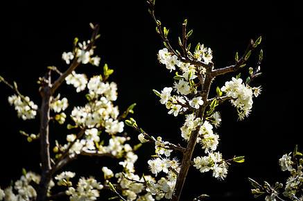 Backyard Blossoms