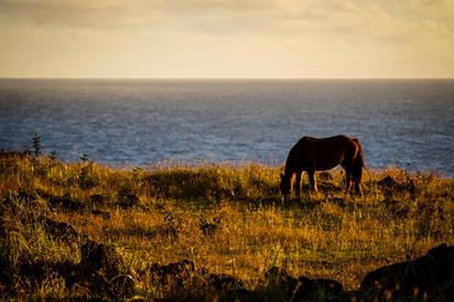 Horse on Rapa Nui 3