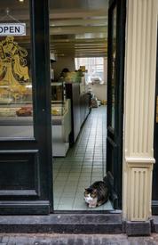 Amsterdam Shop Cat