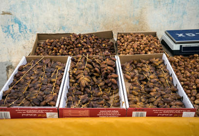 Dates of Morocco