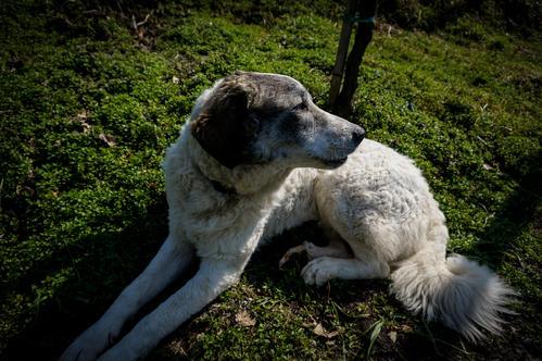 Tuscan Doggo