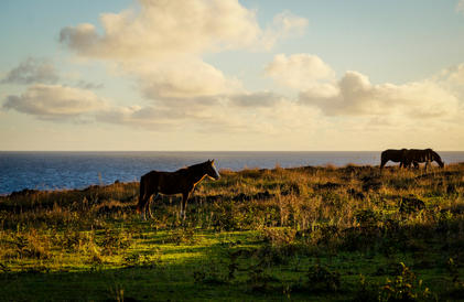 Horses on Rapa Nui 2