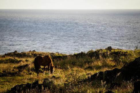 Horse on Rapa Nui 4