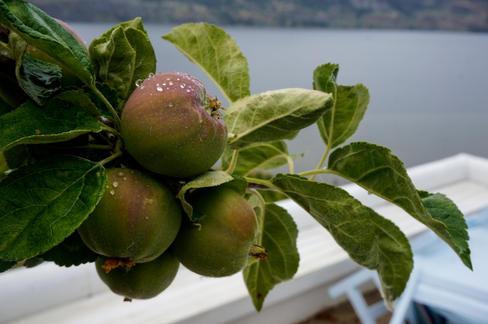 Apples, Penticton, BC