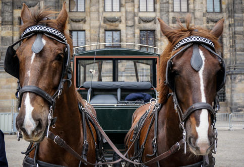 Horses in Dam Square