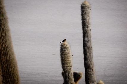 Bird on Isla Incahuasi