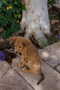 Puppy at Abu Simbel