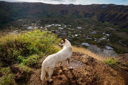 Dog on a Dormant Volcano