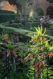 Al Hambra Gardens