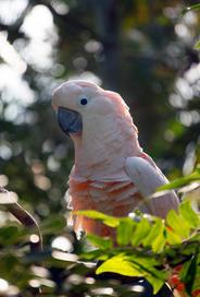 Bright Bird 3