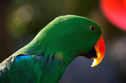 Bright Bird 2
