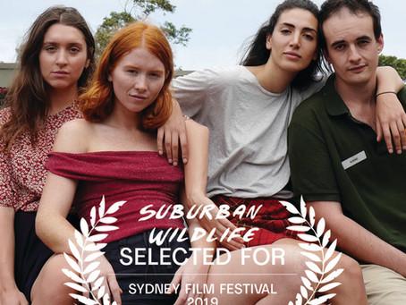 SUBURBAN WILDLIFE SELECTED FOR SYDNEY FILM FESTIVAL 2019