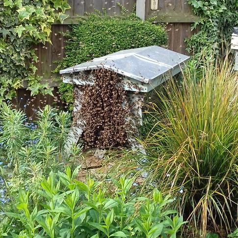 Swarm On Hive