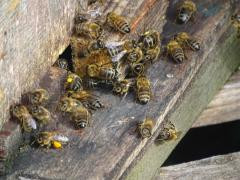 Busy Bee Entrance